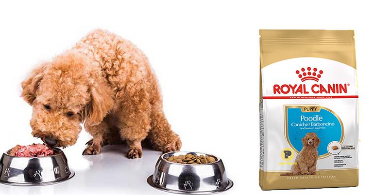 Thức ăn cho chó Royal Canin Poodle Puppy phù hợp dành cho chó Poodle con không?