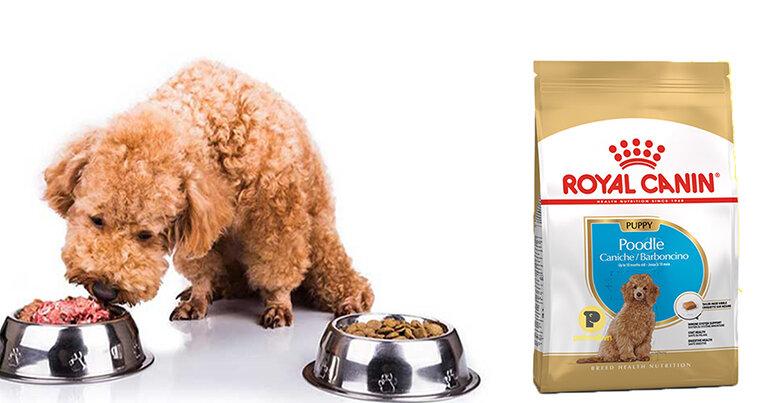 Thức ăn cho chó Royal Canin
