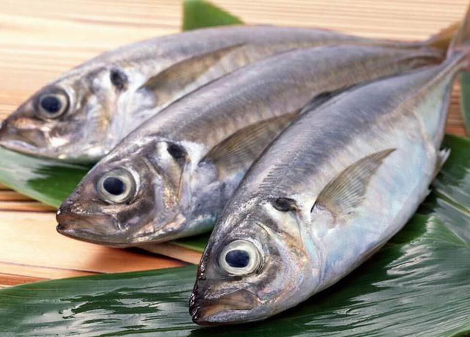 Cá biển chứa rất nhiều vitamin A, D và protein