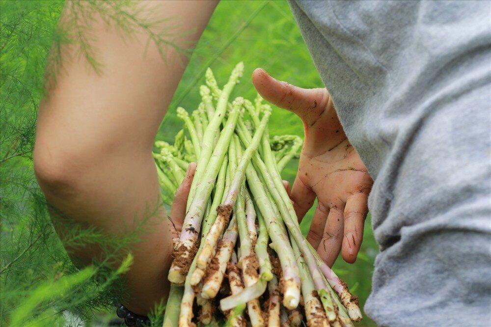 Bạn nên kết hợp măng tây với các loại thực phẩm giàu dinh dưỡng khác