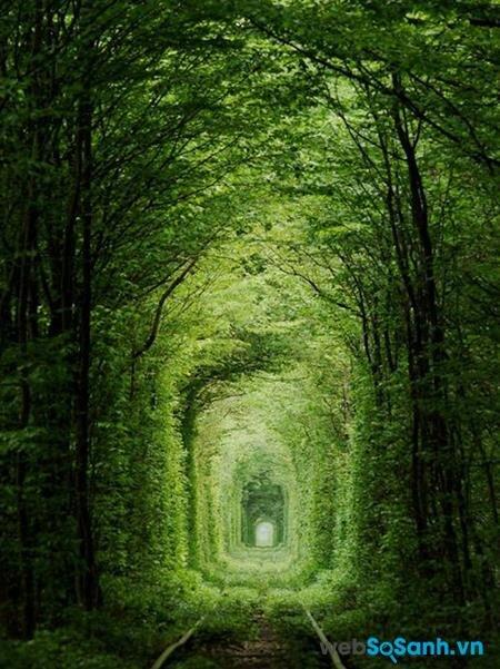 Con đường là hình ảnh đẹp nhất về một sáng tạo của tự nhiên, kết hợp ăn ý với một công trình nhân tạo.