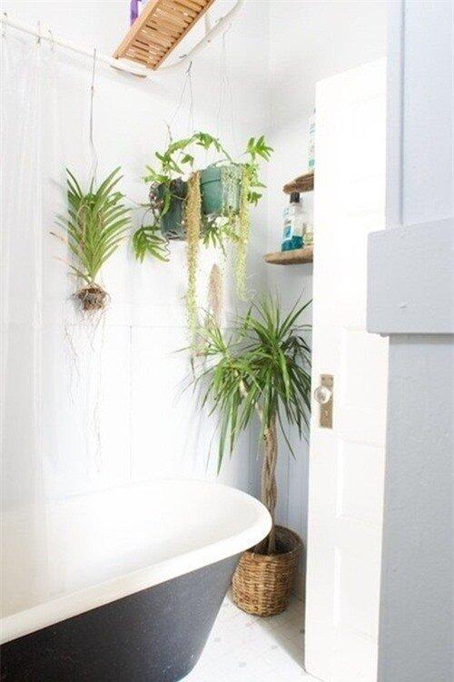 Phòng tắm thư giãn và đẹp mắt nhờ sử dụng cây cảnh 3