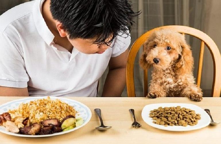 Thức ăn khô cho chó là gì?