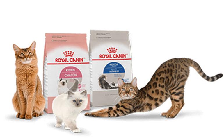 Thức ăn khô cho mèo Royal Canin