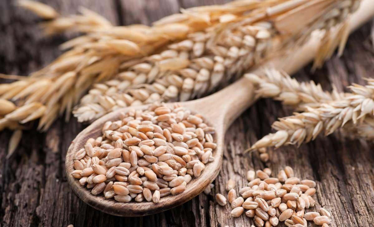 Lúa mì là thực phẩm giàu dinh dưỡng tốt cho não và giúp bạn có một sức khỏe tuyệt vời