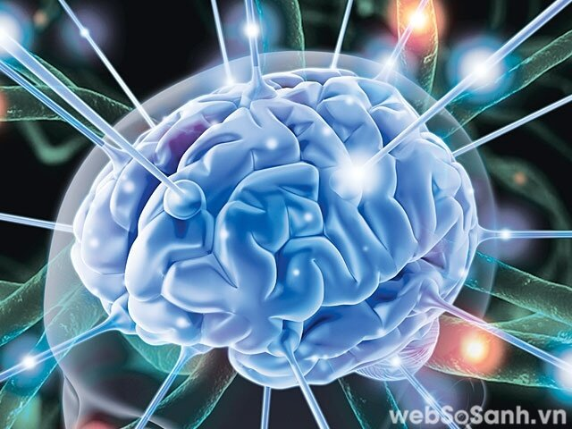 Sóng điện từ có ảnh hưởng đến hoạt động của các tế bào não