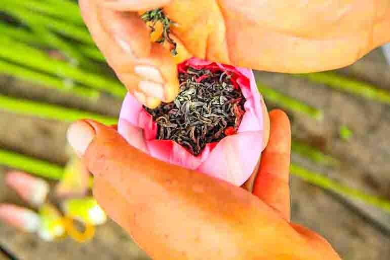 cách ướp trà hoa sen