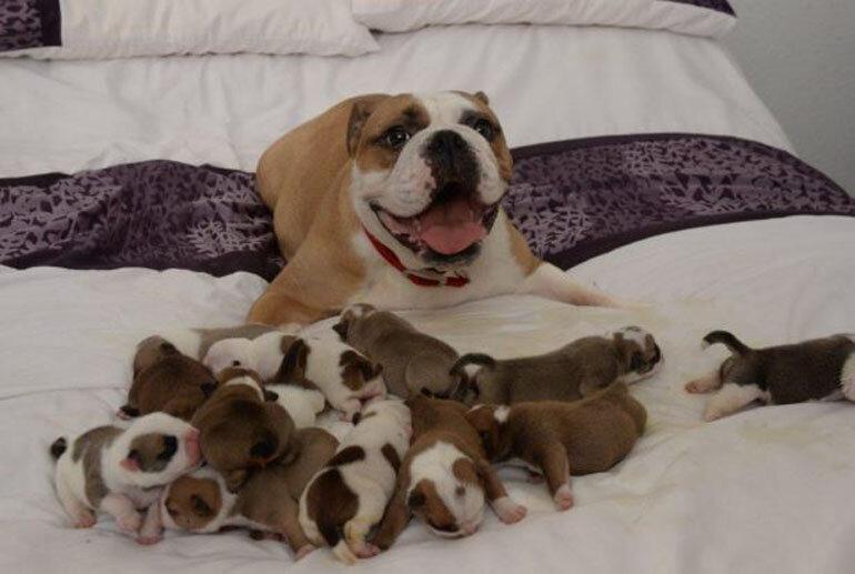 Luôn giữ tổ và nơi ở của chó mẹ thật ấm, nhất là vào mùa đông