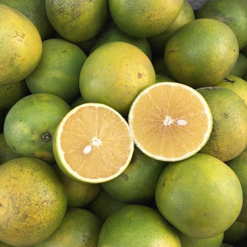 Quả cam chứa nhiều vitamin C tốt cho trí não