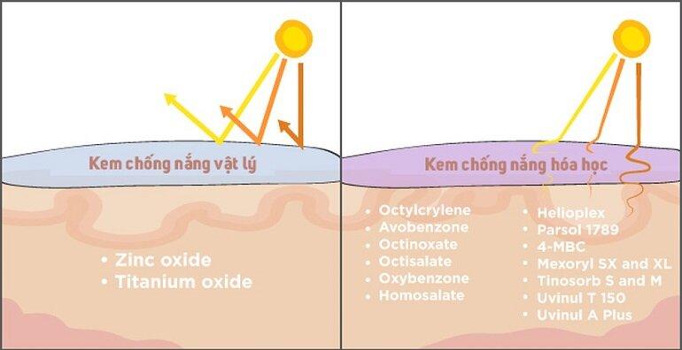 Kem chống nắng vật lý và kem chống nắng hóa học