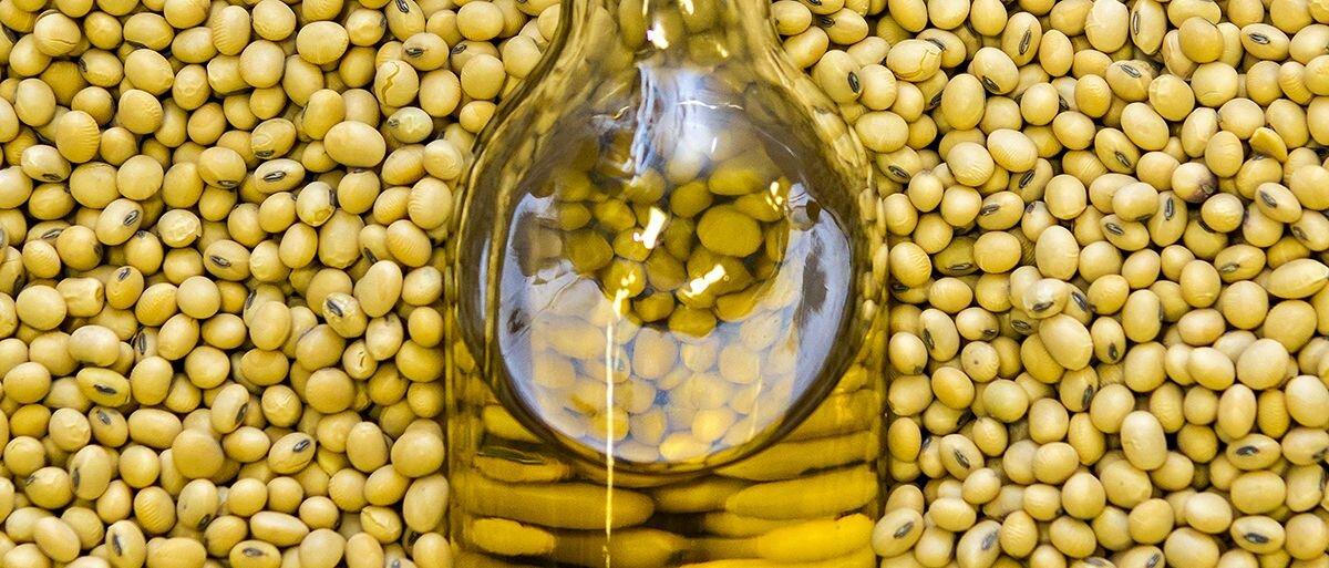 Trong các loại dầu thực vật thì dầu đậu nành giúp cơ thể ngăn ngừa được các bệnh liên quan đến tim mạch