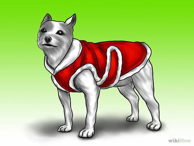 May một chiếc áo cho thú cưng