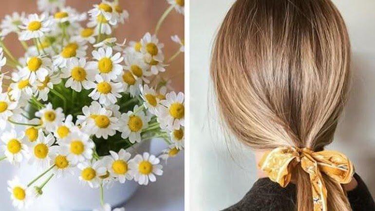 Hoa cúc trị rụng tóc