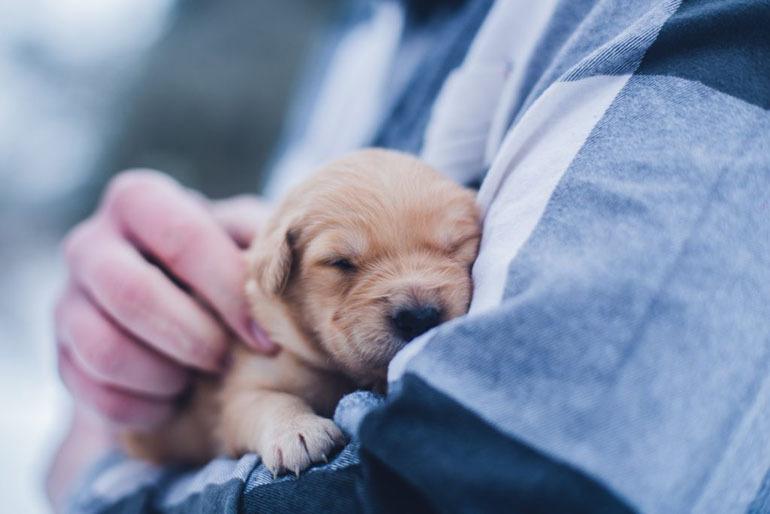 Bước sang tháng thứ 2, các chú chó sẽ bước vào giai đoạn tập ăn dặm