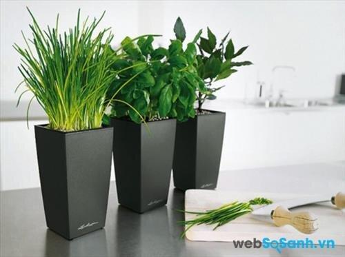 Cây hương thảo, các loại cây xanh, hoặc chậu hoa, túi thơm sẽ khiến căn phòng có mùi dễ chịu hơn