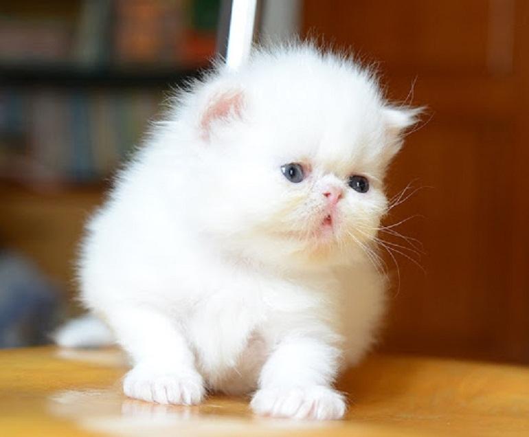 Hệ tiêu hóa và cấu trúc xương của mèo con còn rất non yếu do đó thức ăn cho mèo con cần phải dễ tiêu hóa, dễ nuốt và mềm