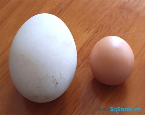 Trứng ngỗng có hàm lượng cholesterol và lipid cao hơn trứng gà
