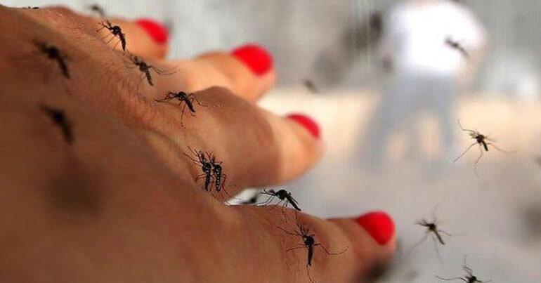 3 lý do bạn vẫn bị muỗi đốt điên cuồng cho dù đã trang bị rất nhiều máy đuổi muỗi