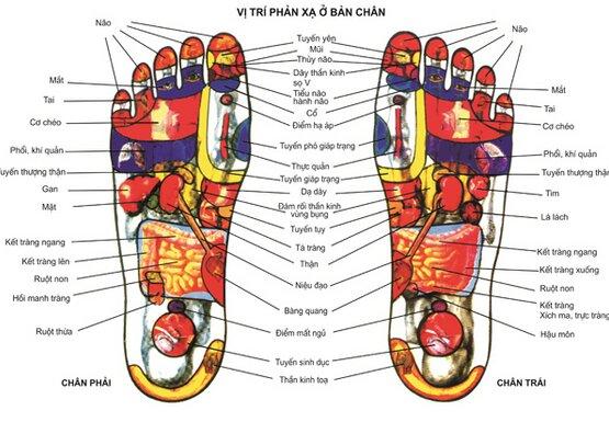 Bàn chân tập trung nhiều huyệt đạo của cơ thể
