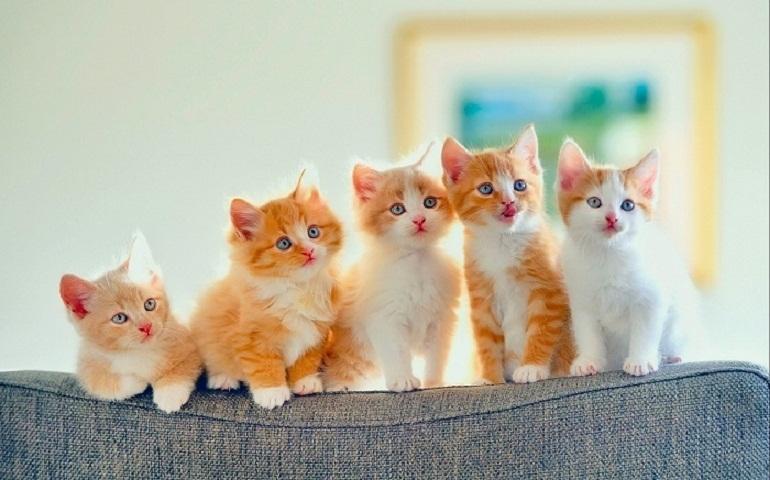 Mèo con 1 tháng tuổi cũng cần được cung cấp đủ các nhóm dinh dưỡng