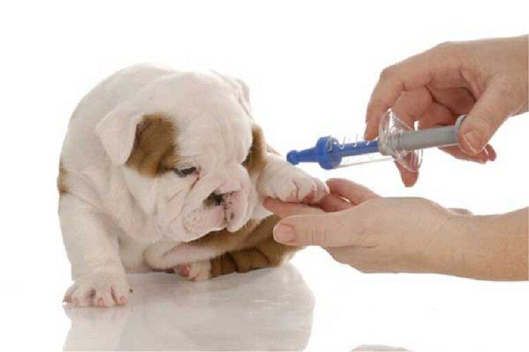 Tiêm phòng giúp chó con tránh xa các bệnh lý nguy hiểm như Pravo hay Care