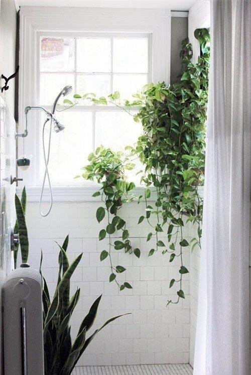 Phòng tắm thư giãn và đẹp mắt nhờ sử dụng cây cảnh 1