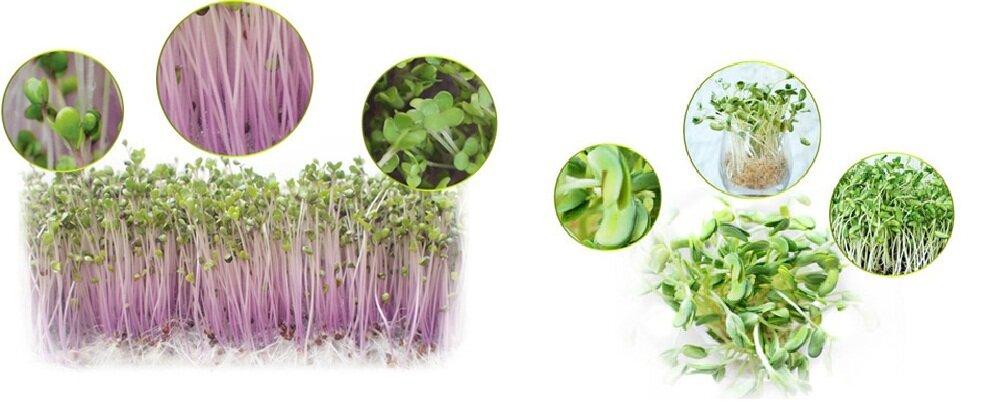 Sản phẩm được tạo ra từ máy làm rau mầm Kangaroo KG-261