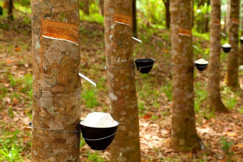 Sản phẩm nệm được sử dụng hoàn toàn từ nguyên liệu thiên nhiên