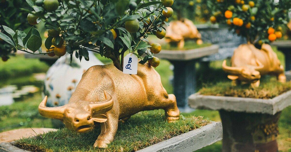 Trâu vàng cõng quất - mẫu quất cảnh, bonsai hot nhất Tết Tân Sửu 2021