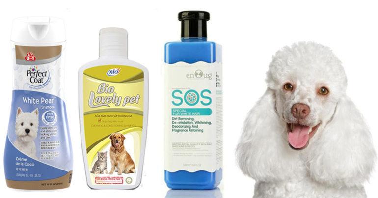 Chọn sữa tắm cho chó poodle của các thương hiệu uy tín và phù hợp với da và lông của poodle trắng