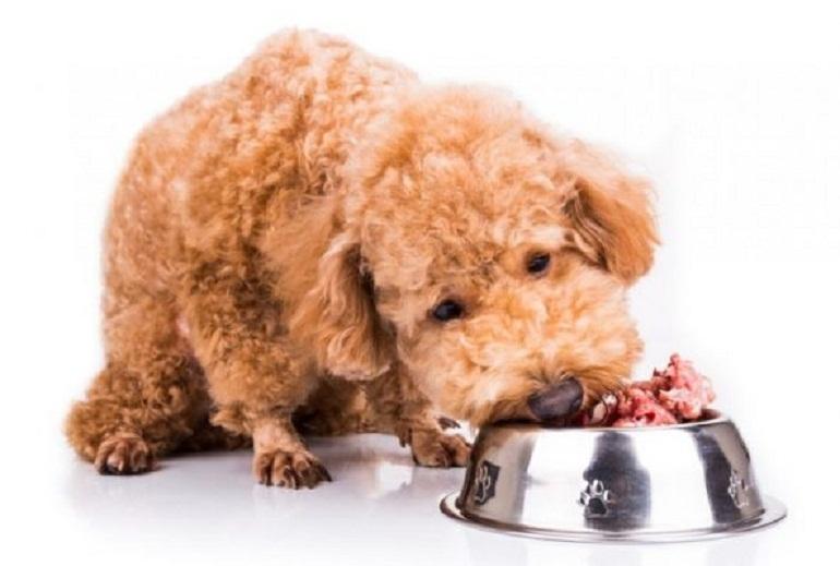Thức ăn cho chó poodle 2 tháng tuổi cần phải nấu chín mềm