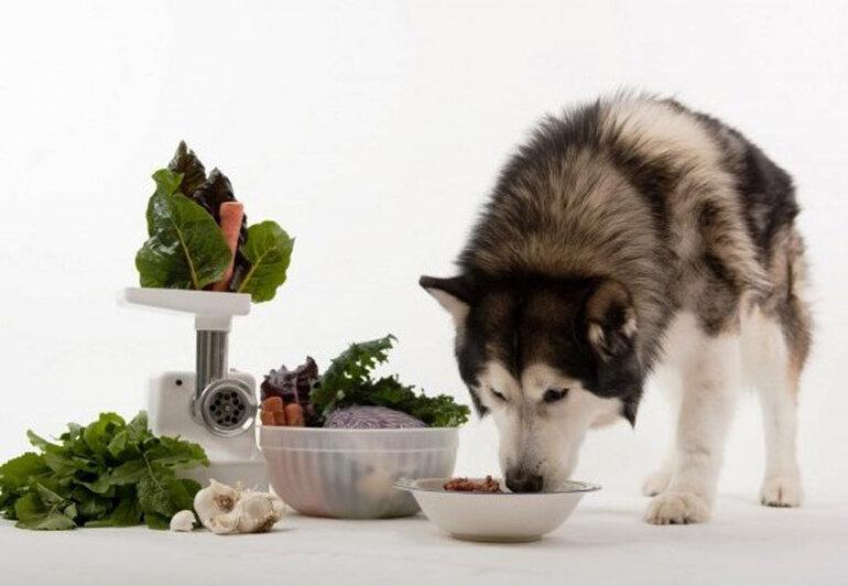 Nên bổ sung thực phẩm rau củ giàu chất xơ cho chó Alaska