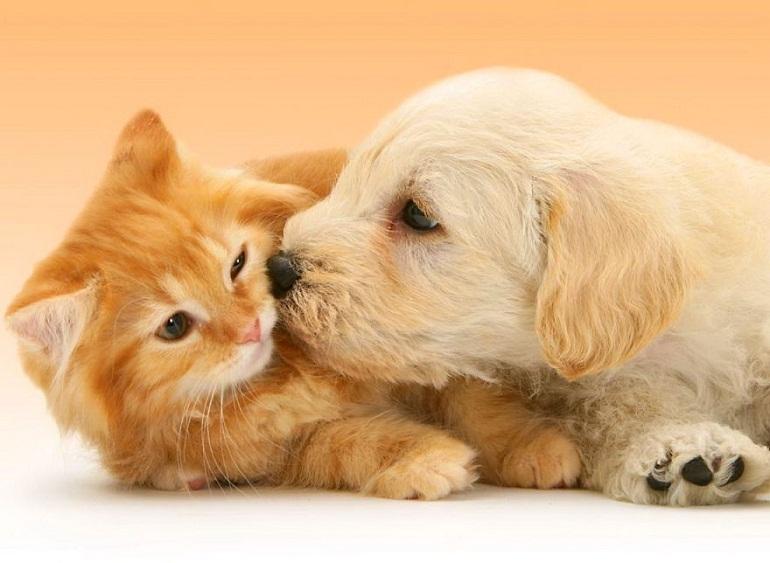 Tìm hiểu về sữa tắm cho chó mèo tốt nhất được chuyên gia khuyên dùng