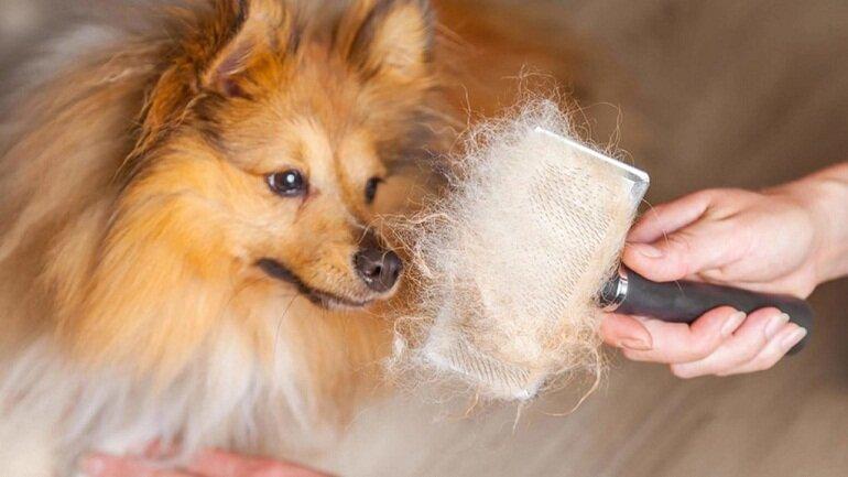 Sử dụng sữa tắm của người có thể khiến chó mèo bị rụng lông