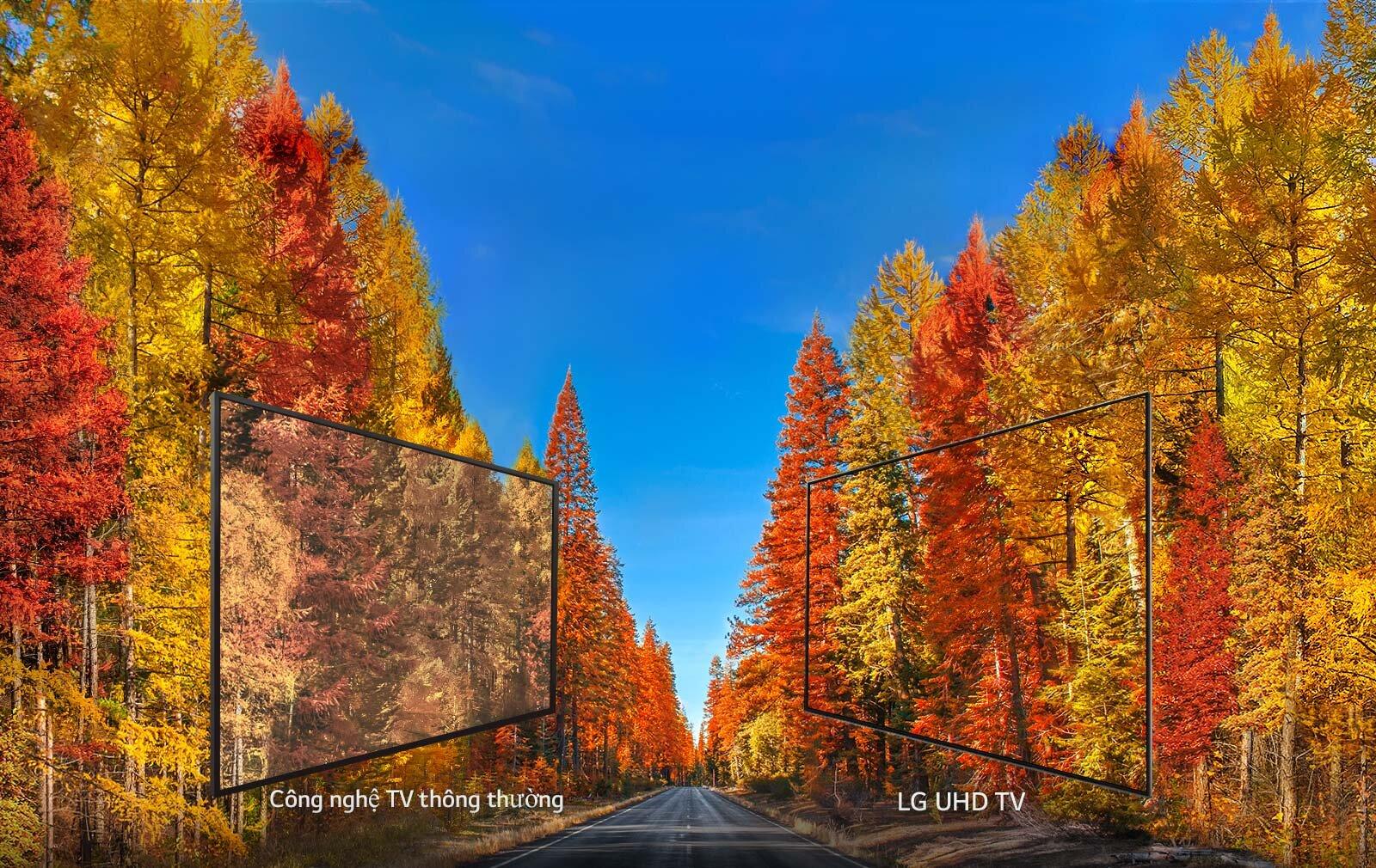 Minh họa độ sắc nét của hình ảnh hiển thị trên tivi LG 43UK6540PTD
