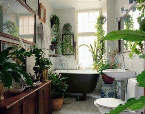 Phòng tắm thư giãn và đẹp mắt nhờ sử dụng cây cảnh 4