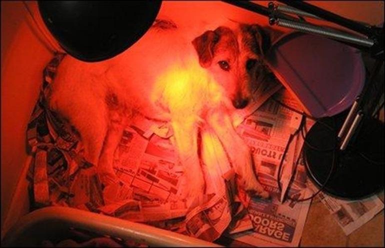 Sử dụng đèn sưởi chó mèo kết hợp cùng ổ giường nằm cho thú cưng.