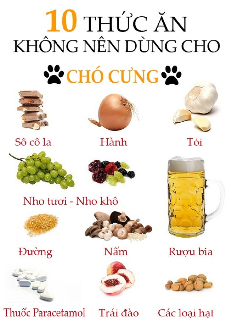 Những thức ăn các chú chó nên tránh xa