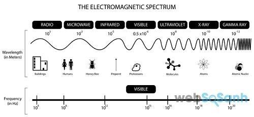 Lò vi sóng sử dụng sóng điện tử để làm chín thức ăn