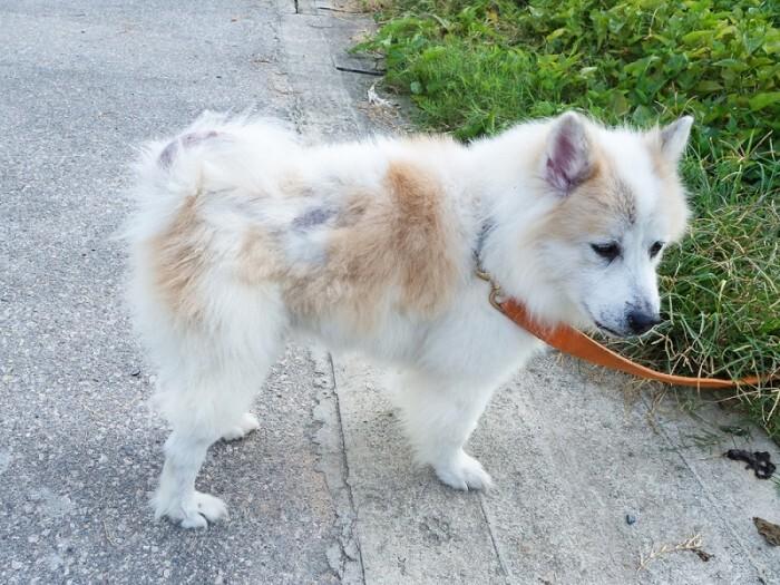 Chú chó của bạn bị rụng lông gây mất thẩm mỹ và ảnh hưởng đến môi trường sống