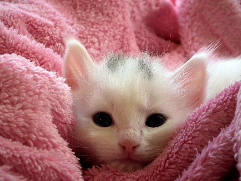 Sữa tắm Fay an toàn với làn da mèo cưng