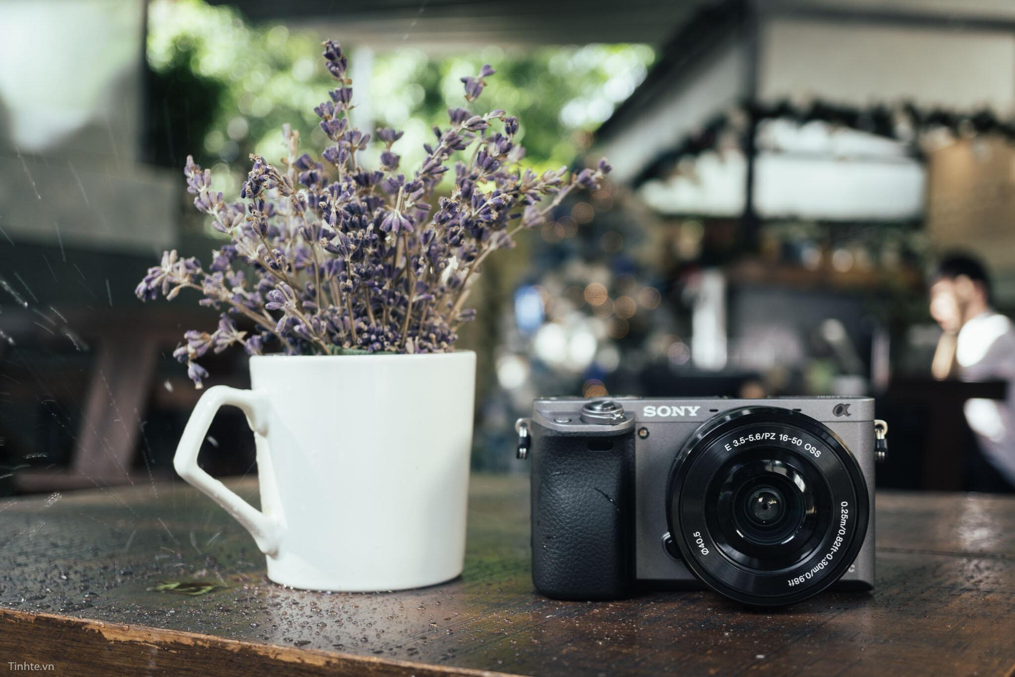 Sony A6000 hay A5000, dòng máy nào cho chất lượng hình ảnh tốt hơn?