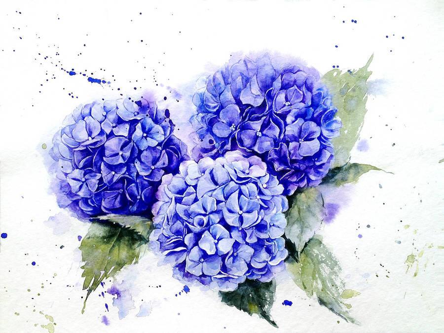 Đóa hoa cẩm tú cầu vô cùng chân thật