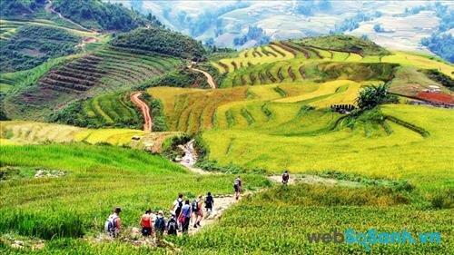 SaPa đẹp tuyệt vời với những cánh đồng lúa chín vàng