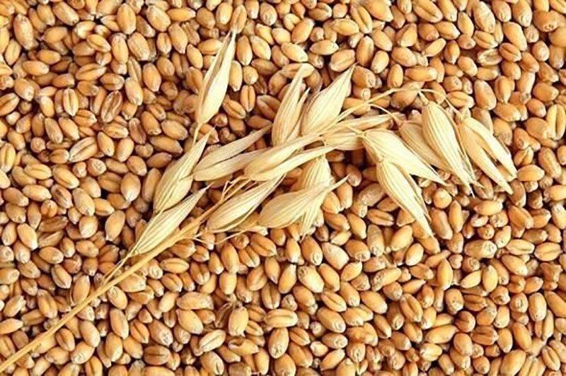 Lúa mì nguyên cám là nguồn cung cấp chất vitamin PP rất dồi dào và đặc biệt tốt cho sức khỏe
