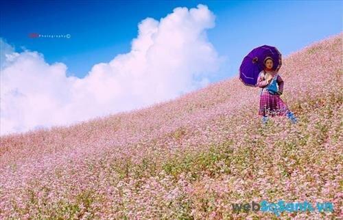Cô gái người Mông giữa đồi hoa tam giác mạch