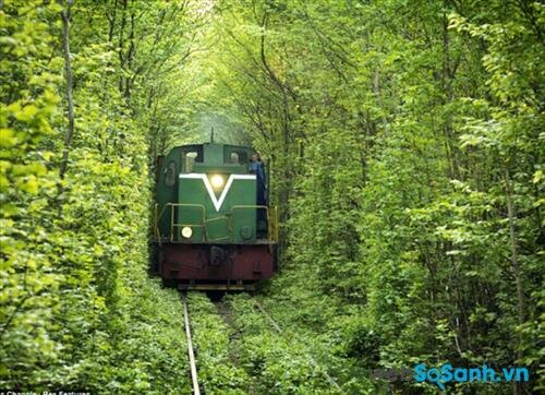 Sau khi xây dựng đường ray xe lửa, những bụi cây sau đó đã mọc tự nhiên bao quanh lấy con đường, trùm cả phía trên, khiến người đi trong đó cảm giác như đang đi trong một con đường hầm ngay trên mặt đất