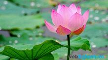 10 loài hoa Tết phổ biến nhất và ý nghĩa phong thủy của chúng