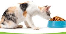 10 loại thức ăn cho mèo nên ăn thường xuyên