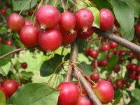 10 nguyên liệu tự nhiên giúp thải độc gan